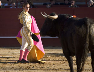 bull-fighter-md.jpg