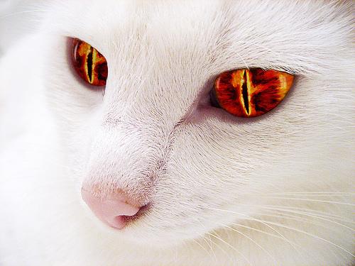 evil.cat.jpg