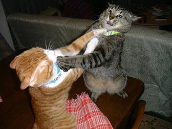 cats_fighting_102006_5.jpg