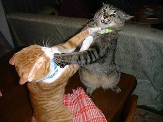 cats_fighting_102006_5.jpg