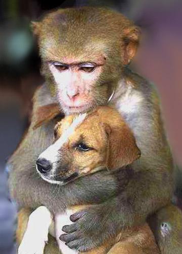 monkeyandpuppylg.jpg