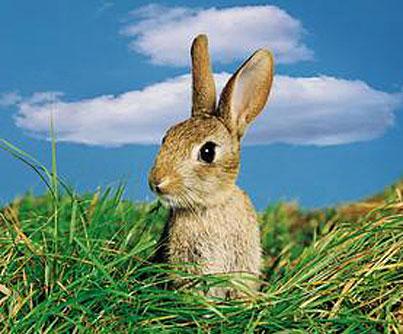 rabbits_mn.jpg