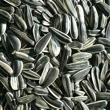 Sunflower_Seeds.jpg