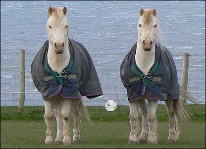 horse.twins.jpg