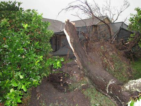 split.tree.jpg