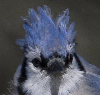 Blue-Jay-hairdo-BINNS-IMG_9.jpg