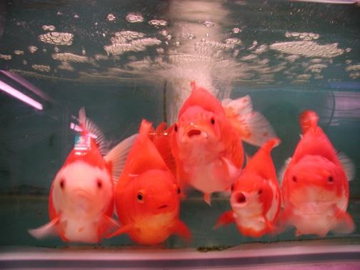 goldfish1.jpg