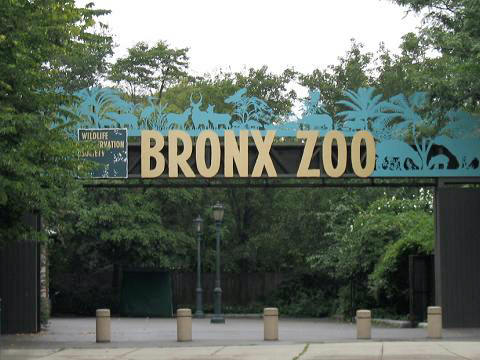 BronxZoo1.jpg