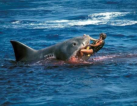 JAWS20shark20attacks20woman.jpg