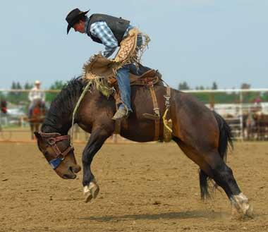 rodeo-cowboy-bronco.jpg