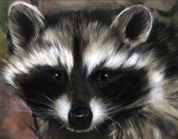 Raccoon-07-727471.jpg