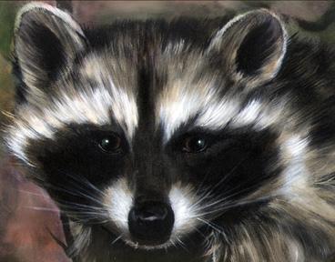 Raccoon-07-727471.jpg