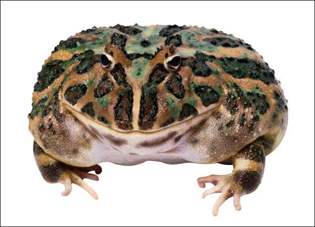 toad-picture.jpg