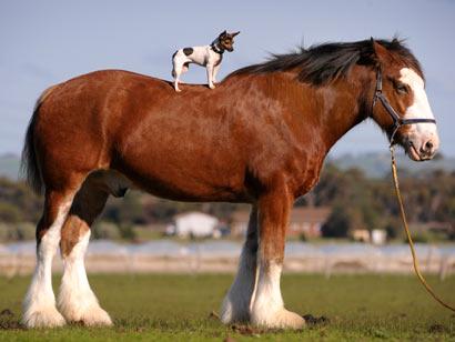horse.dog.jpg