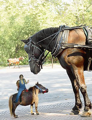 small horse_edited-1.jpg