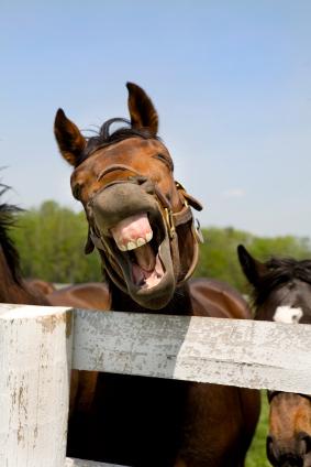 laughing-horse.jpg