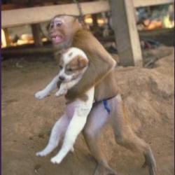 monkeyanddog.t_250_0.jpg