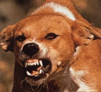 rabid-dog.jpg
