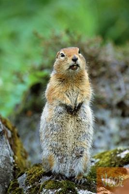 squirrel.stands.JPG.jpeg