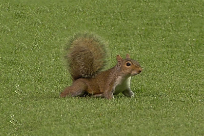 squirrel2.jpg