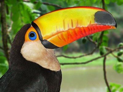 toucan2.jpg