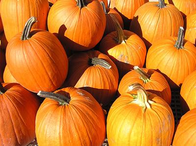 pumpkins400.jpg