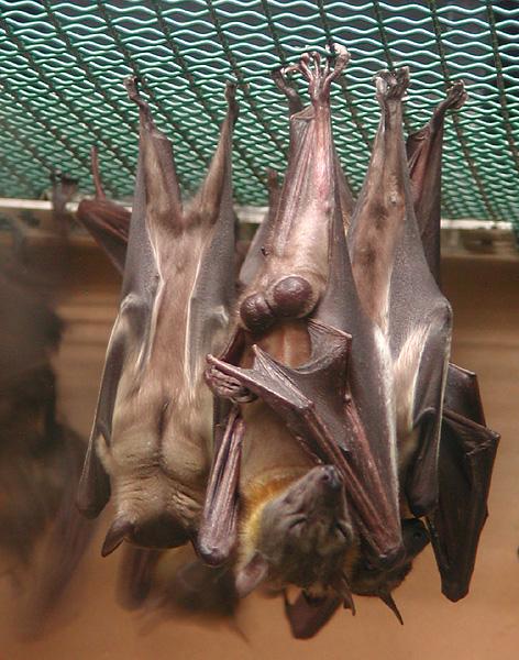 sleeping-bats.jpg