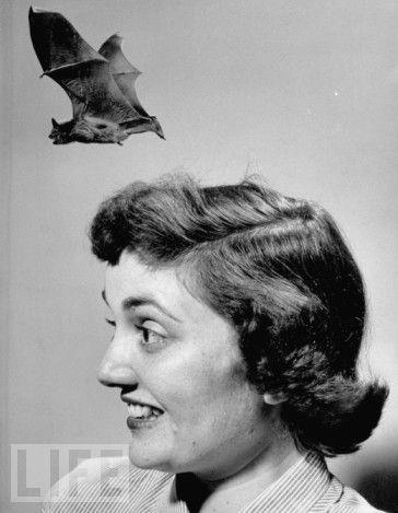 woman.bat.jpg