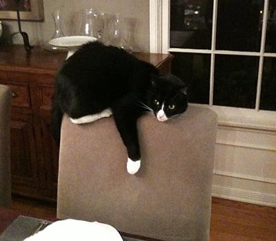Rhonda's cat.jpg